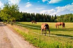 Konie i źrebię na gospodarstwie rolnym Fotografia Royalty Free