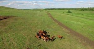 Konie i krowy w łące zdjęcie wideo