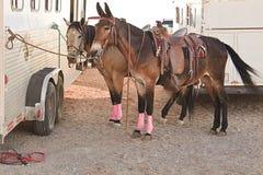 Konie i przyczepa obrazy royalty free