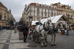 Konie kareciani w Praga Obraz Royalty Free
