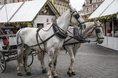 Konie kareciani w Praga Obrazy Royalty Free