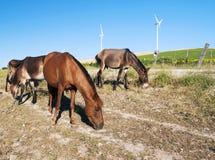 konie kilka Zdjęcia Stock