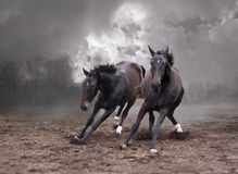 konie mroczni Zdjęcia Stock