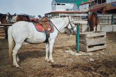 Konie na gospodarstwie rolnym jedzą, wypasają, rancho, zwierzęta Fotografia Royalty Free