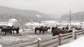 Konie na gospodarstwie rolnym w zimie przy gospodarstwem rolnym zbiory