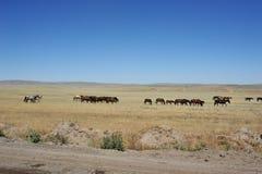 Konie na obszarach trawiastych fotografia stock