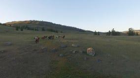 Konie na paśniku zbiory