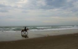 Konie na Plaży Obrazy Royalty Free