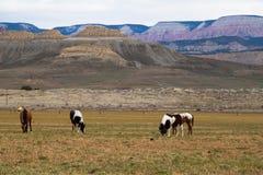Konie na polu Zdjęcia Royalty Free