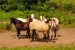 Konie na rodziny gospodarstwie rolnym Zdjęcie Stock