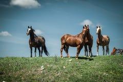 Konie na Trawiastym pagórku fotografia stock