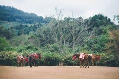 Konie na wzgórzu Zdjęcia Royalty Free