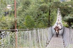 Konie niesie obciążeniowego skrzyżowanie zawieszenie mosta zdjęcia stock