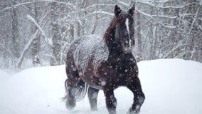 Konie Outside podczas zima śnieżycy