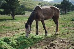 Konie pasa w górach, pola, łąki, zwierzęta, bydlę Obraz Royalty Free