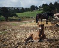 Konie pasa w górach, pola, łąki, zwierzęta, bydlę Zdjęcie Royalty Free