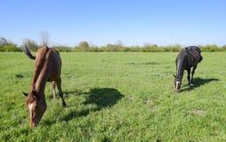 Konie pasają w paśniku Padoków konie na konia gospodarstwie rolnym koni target2149_1_ Fotografia Stock