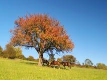 Konie pod drzewem przy opóźnionym wieczór zdjęcia royalty free