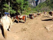 Konie przy bazą Paro Taktsang, Bhutan, nieść podróżników do wierzchołka dosięgać świątynię Fotografia Stock
