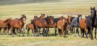 Konie przy paśnikiem Obraz Royalty Free