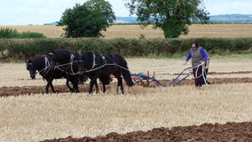 Konie przy Pracującego dnia kraju przedstawieniem w Anglia Fotografia Stock