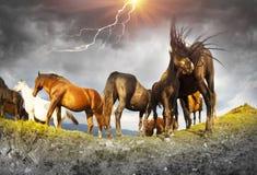 Konie przy wierzchołkiem w burzy Zdjęcia Royalty Free