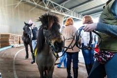 Konie różnorodni trakeny przy wystawą konie zdjęcia royalty free