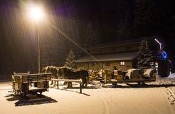 Konie Rysujący sań czekania Zdjęcia Royalty Free