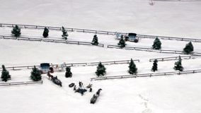 Konie Rysujący sania na śnieżnej drodze zdjęcie wideo