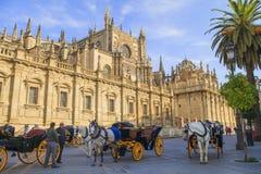 Konie rysujący frachty w Seville Obrazy Stock