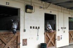konie stabilne zdjęcia stock