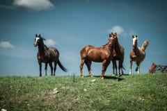 Konie Stoi na wzgórzu Pod niebieskim niebem obraz stock
