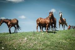 Konie Stoi Przeciw niebieskiemu niebu zdjęcia stock
