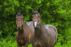 Konie stoi w deszczu zdjęcia stock