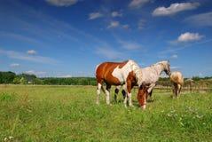 Konie target192_1_ w łące zdjęcie stock