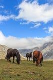 Konie Trasa przez cudownych miejsc Picos De Europa Obraz Royalty Free