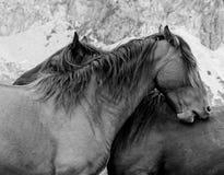 Konie Trasa przez cudownych miejsc Picos De Europa Zdjęcia Royalty Free