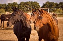 konie trzy Zdjęcie Stock