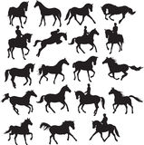 konie ustawiający Zdjęcie Royalty Free