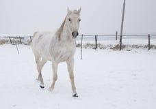 Konie w śniegu zdjęcia stock