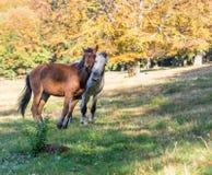 konie w drewnach zdjęcie royalty free