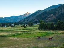 Konie w Fechtującym się polu Zdjęcia Stock
