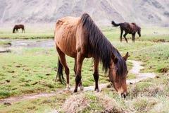 Konie w górach Zdjęcia Royalty Free