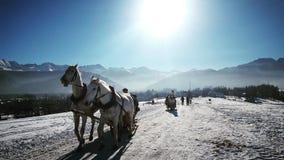 Konie w górach Zdjęcie Royalty Free