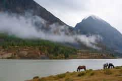 Konie w górach blisko jeziora Zdjęcie Royalty Free