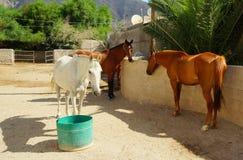 Konie w końskim jardzie Zdjęcia Stock