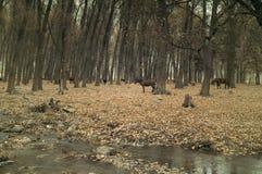 Konie w lesie obrazy stock