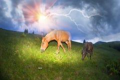 Konie w mgłowych Carpathians Zdjęcia Royalty Free