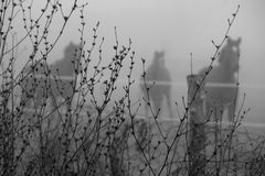 Konie w mgle obraz stock