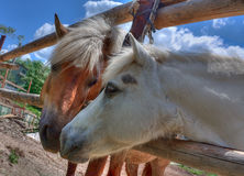 Konie w Miłości obraz stock